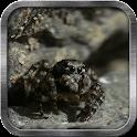 Cute Spider Live Wallpaper icon