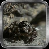 Cute Spider Live Wallpaper