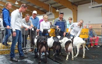 Photo: Rubriek 1. Bonte geiten geboren in 2015. 1a. Zwaanheuvel Roxanne 5; 1b. Driesprong Marieke 13; 1c. Zwaanheuvel Chanica 3; 2a. Driesprong Elda 15.