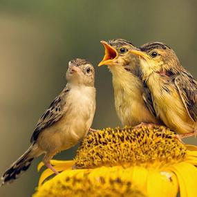 Cute Birds by Husada Loy - Animals Birds