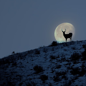 C:\Users\rjpuzio\Pictures\deer moon canvas.jpg