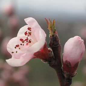 came the Spring by Vladimir Krizan - Flowers Flower Gardens