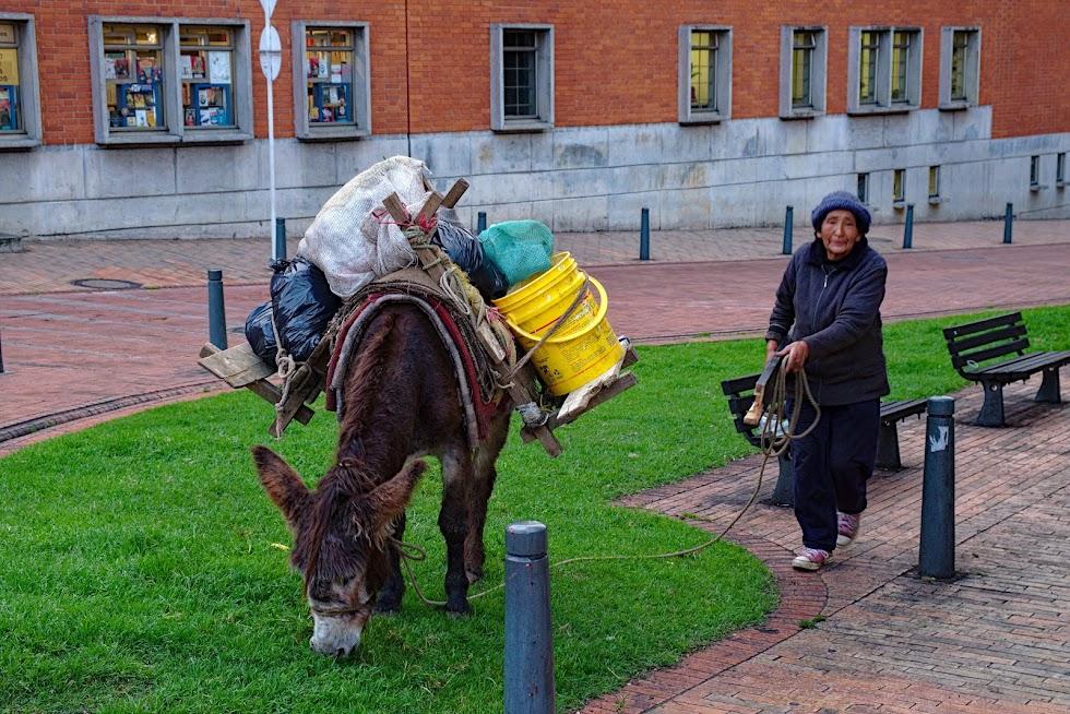 Bogota osiołek