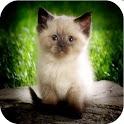 Cat Lingo - talk to your cat icon