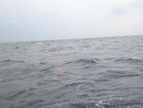Photo: ちょっとずつ波が高くなってきてますよー。