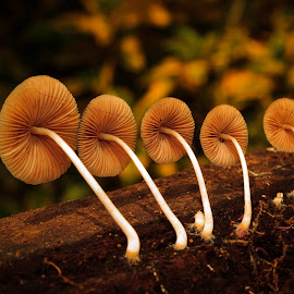 fall in line by Joey Casalan - Nature Up Close Mushrooms & Fungi