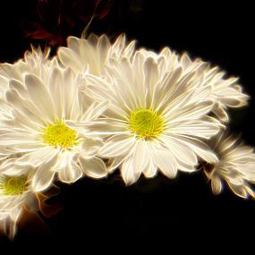 Daisy Bunch by Benjamin Howen III - Digital Art Things ( daisy, flower )