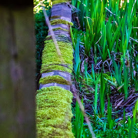 by Helen Andrews - Nature Up Close Other Natural Objects