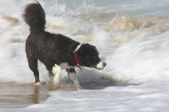 Photo: Year 2 Day 169 - Still Looking for the Ball