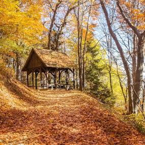Adolfovac by Dražen Škrinjarić - Landscapes Forests ( cabin, exterior, house, leaf, leaves, hiking, medvednica, summerhouse, rural., nature, autumn, foliage, cottage, path, park, pathway, croatia, forest, zagreb, woods, holiday, wooden, fall, outdoors, summer, trees,  )