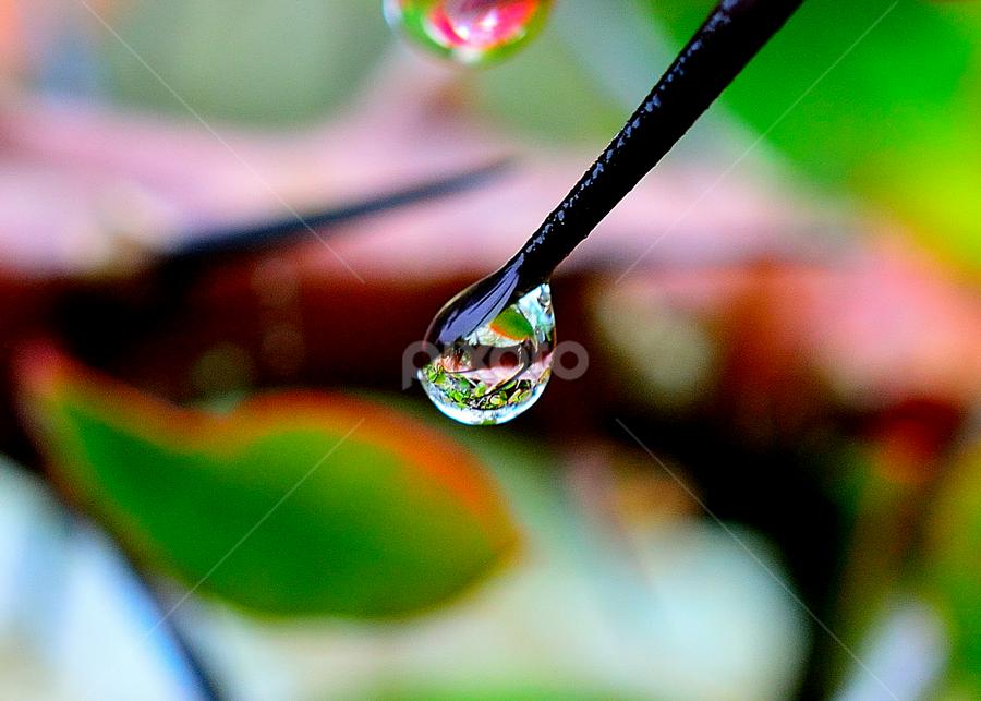 Water Drop by Maniraj M - Nature Up Close Water