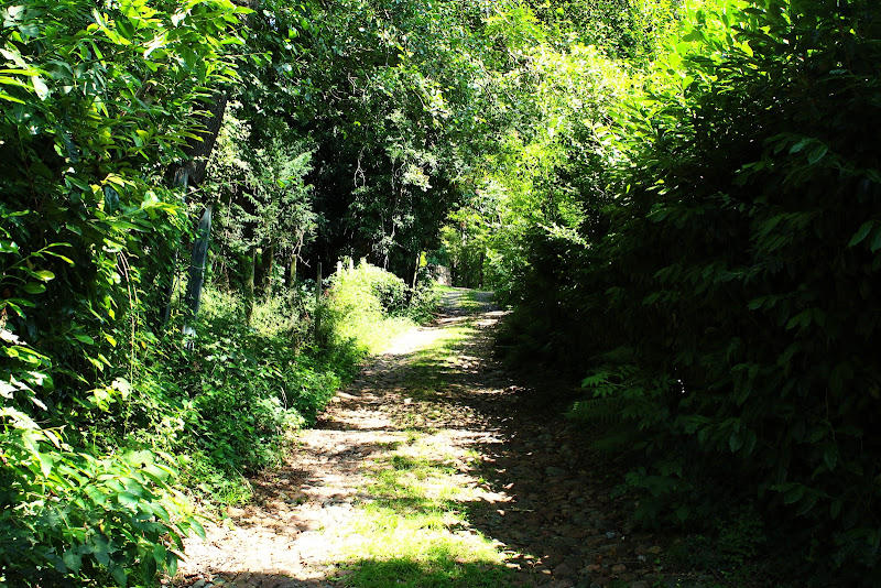 Cammino fra sfumature di verde di Uomoz