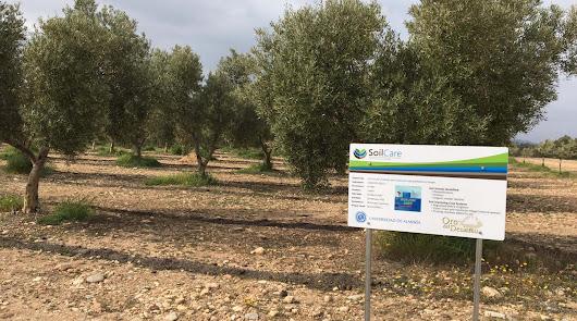 Finaliza con éxito el proyecto SoilCare de la Universidad de Almería