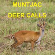 Muntjac Deer Calls
