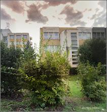Photo: Str. Andrei Mureşanu, liliac, plaoa de aur, alun - 2017.09.26