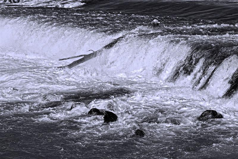 Tronco sulla cascata di Daimon