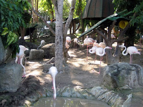 "Photo: Before we get on for the first bus ride segment, Keith gets this photo of the flamingo (or ""'mingos"" in Anya language) flock."