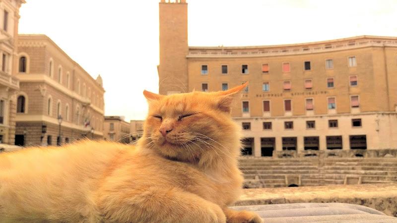 Vita da gatti di Mattia Lezzi
