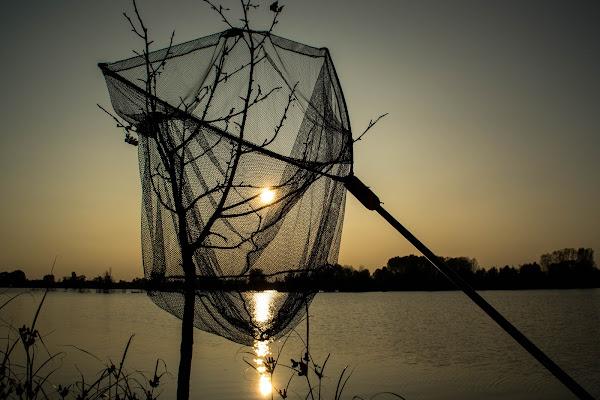 Catturando il sole di vaiolet