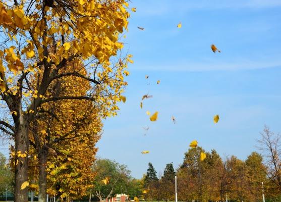 Come d'autunno sugli alberi le foglie. di vichy