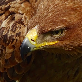 by Ramade Genevieve - Animals Birds (  )