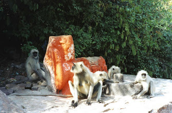Photo: Monkeys next to a sacred stone