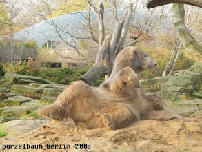 Photo: Knut raekelt sich laessig ;-)