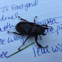 Pinching beetle