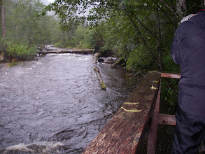 Photo: Success!  A black bear appears upstream.  That's me on the right, shooting with the big lens.