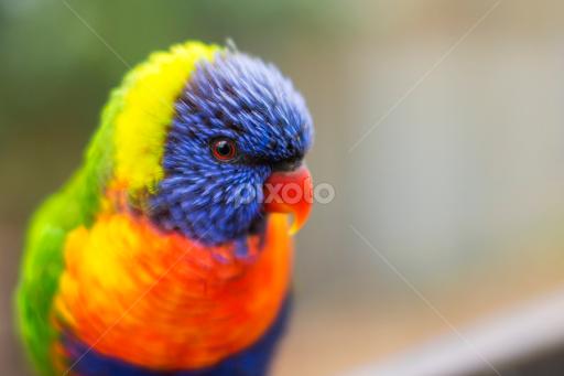 real life rainbow birds animals pixoto