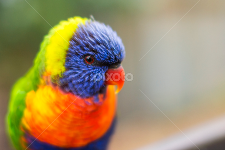 Real Life Rainbow Birds Animals Pixoto