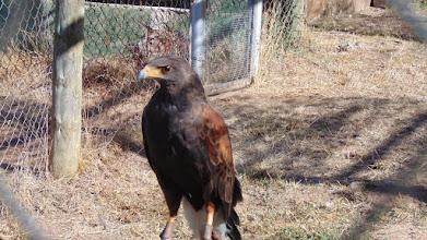 Photo: Águila