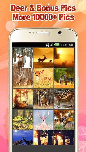 Beautiful Deer Wallpaper