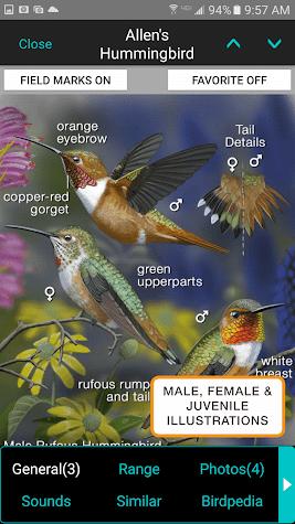 iBird Pro Birds North America Screenshot