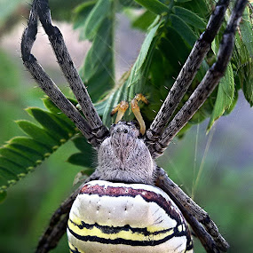 by Hilda Tan - Animals Insects & Spiders