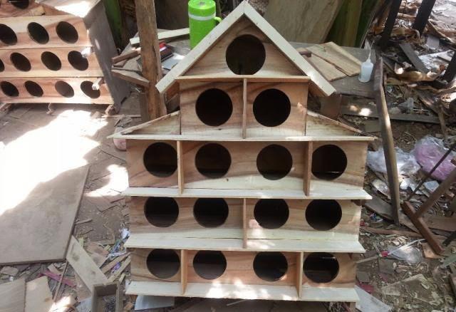 Cách nuôi chim bồ câu thả rông. Mô hình nuôi chim bồ câu thả vườn