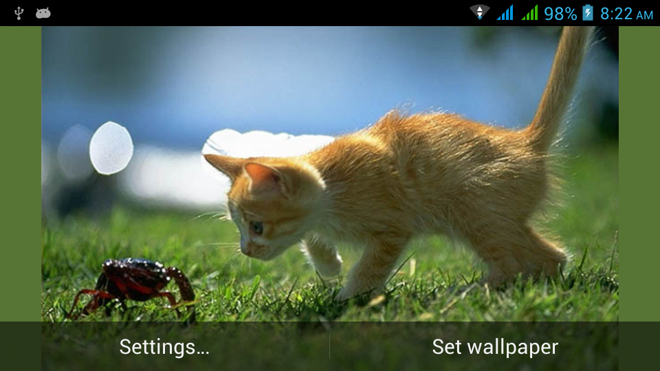 funny cats live wallpapers android apps on google play