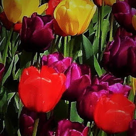 colors of spring by Lavonne Ripley - Nature Up Close Gardens & Produce