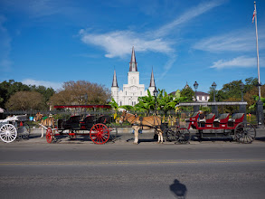 Photo: Donkeys pulling carriages on Jackson Square