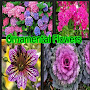 Ornamental Flowers APK icon