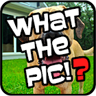 What The Pic!? - Photo Quiz icon