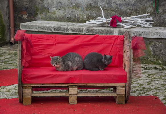 Miao..auguro passiate delle serene feste di carlitos864