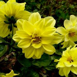 by Ashwathi Madhavan - Flowers Flower Gardens