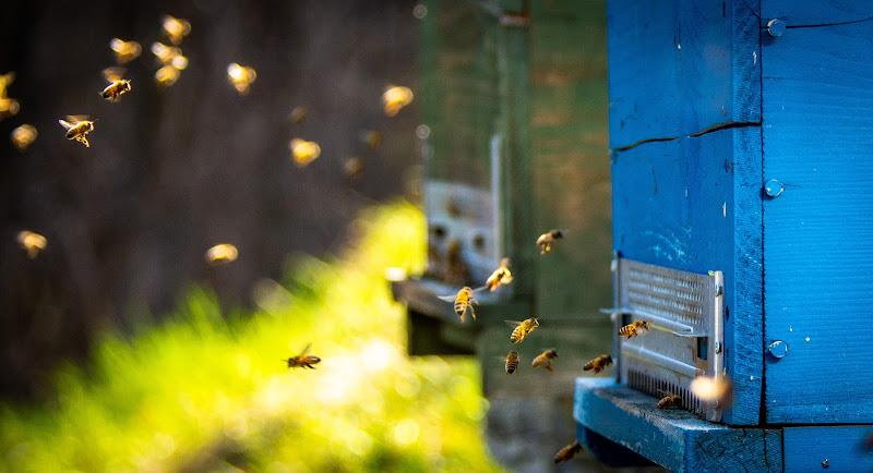 Polline in arrivo  di joseph_giachino