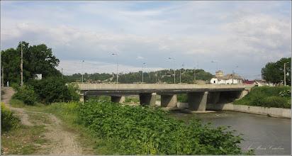 Photo: Podul mare din beton Str. Stefan cel Mare -  Iulişca (Fallopia japonica), planta invaziva, pe malul Raului Aries, zona industriala - 2018.05.10