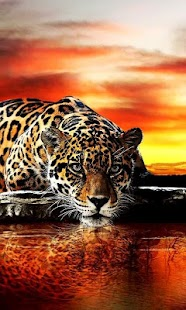 Leopard live wallpaper for PC-Windows 7,8,10 and Mac apk screenshot 3