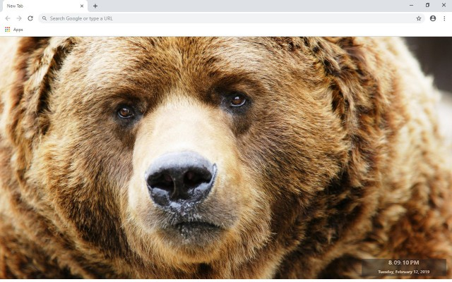 Bear New Tab & Wallpapers Collection