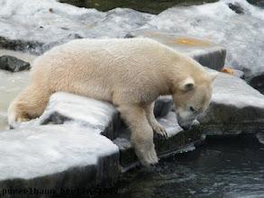 Photo: Knut schaut interessiert in den Wassergraben ;-)