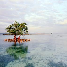 by Syahbuddin Nurdiyana - Landscapes Waterscapes