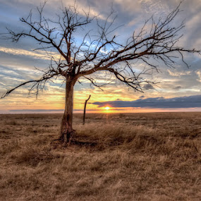 Lone Tree Sunset by Jim Talbert - Landscapes Sunsets & Sunrises ( fence, pasture, sky, nature, tree, hdr, sunset, landscape, landscapes, kansas )